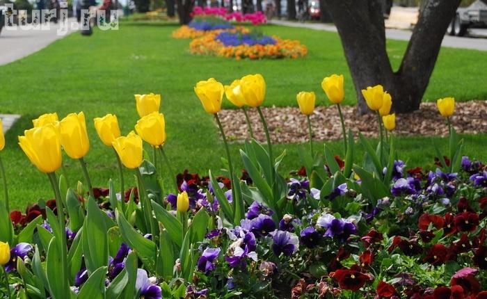 Швейцария.Женева.Выставка тюльпанов в Морже. 4