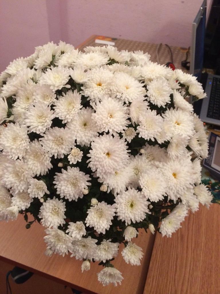 красивый букетик цветов