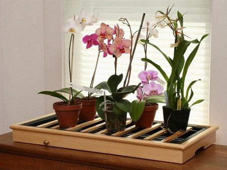 polivaem orhideii