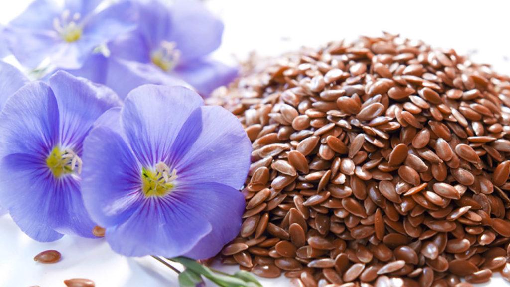semena-lina
