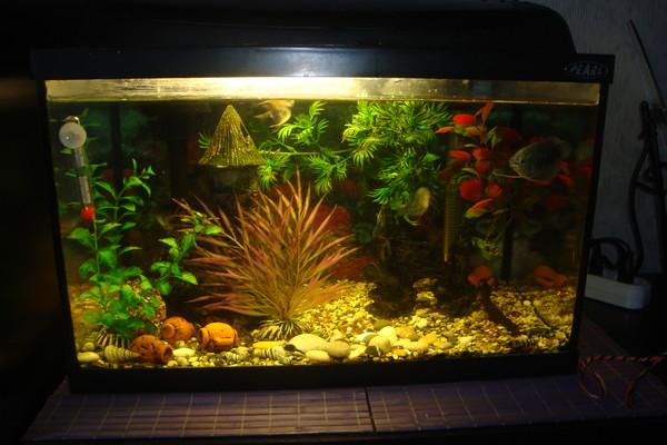 gde lucse postaviti akvarium s ribkami
